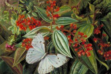 arboles y mariposa